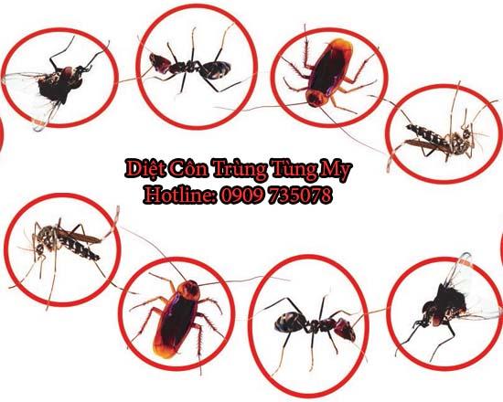 diệt muỗi tại long thành
